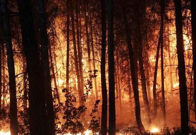 Son Dakika! Orman yangını çıkardığı iddiasıyla yakalanan zanlı tutuklandı