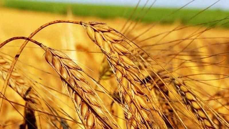 Arpa için çiftçiye 1.750 yabancıya 2.400 lira!