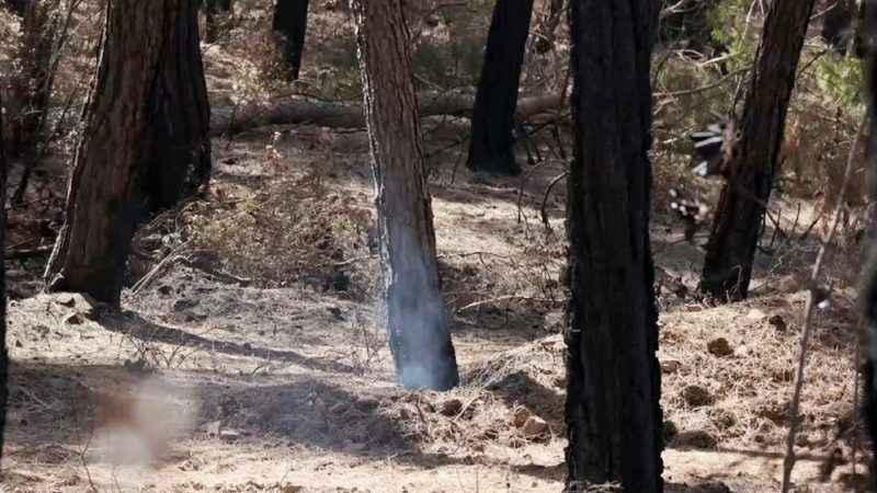 Manavgat'ta ürküten manzara! Yangının üzerinden 25 gün geçti, hâlâ duman tütüyor