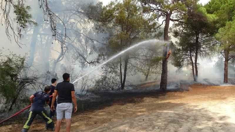 Manavgat'ta ormanı kim yaktı?