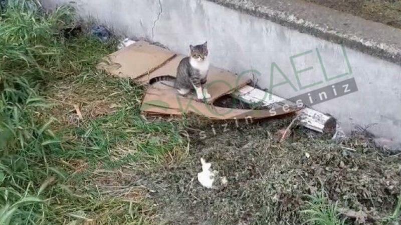 Ölen yavrusunu uyandırmaya çalıştı