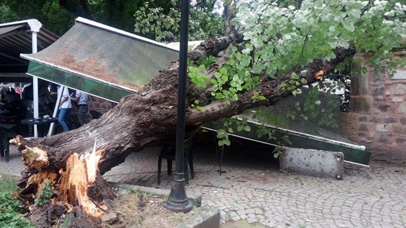 Yeni Cuma'da ağaç devrildi