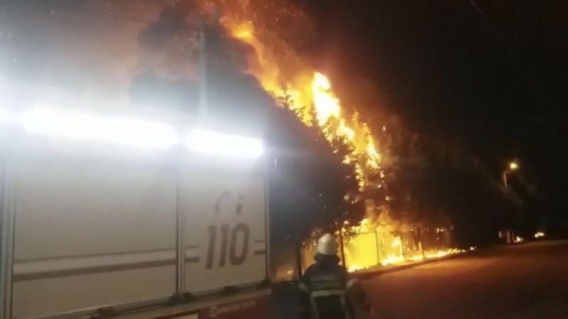 Çam ağaçlarını ateşe verdiler
