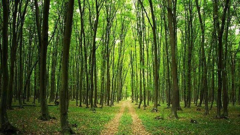 Kocaeli'de ormanlık alanlara giriş YASAK