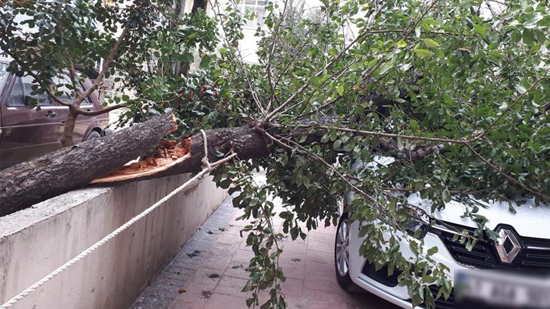 Fırtınadan ağaç devrildi