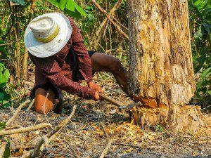 Komşusu Ağaçlarını Kesince Soluğu Karakolda Aldı
