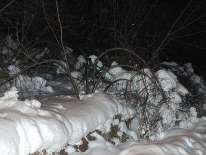 Ağaçlar Karın altında kaldı.