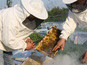Arı yetiştiricileri bu yıl çok umutlu!