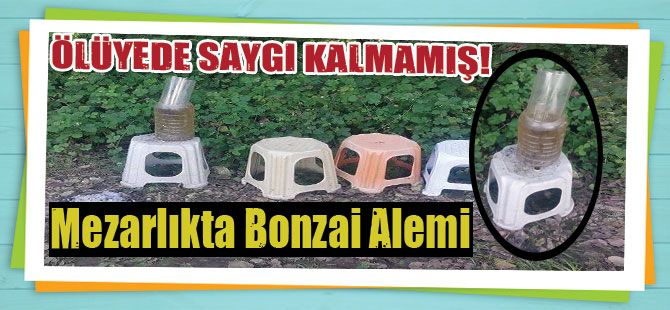 Mezarlıkta Bonzai alemi