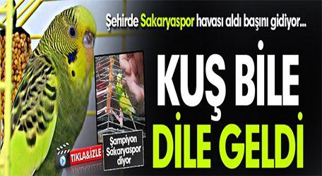 Muhabbet Kuşu dile geldi: Şampiyon Sakaryaspor