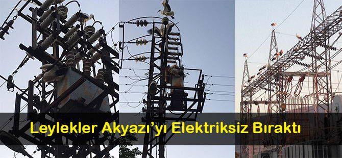Leylekler Akyazı'yı Elektriksiz Bıraktı