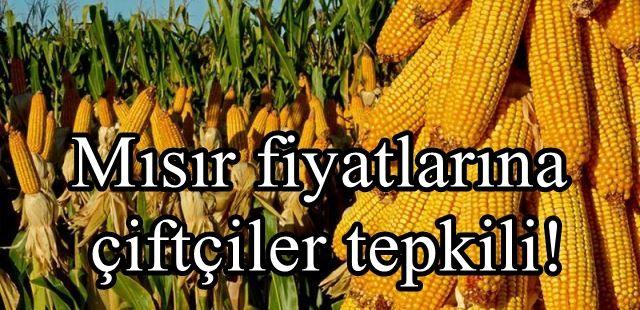 Mısır fiyatlarına çiftçiler tepkili!
