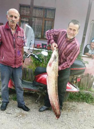 Akyazılı Balıkçılar 9,5 Kiloluk yayın balığı yakaladılar