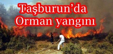 Taşburun'da Orman yangını