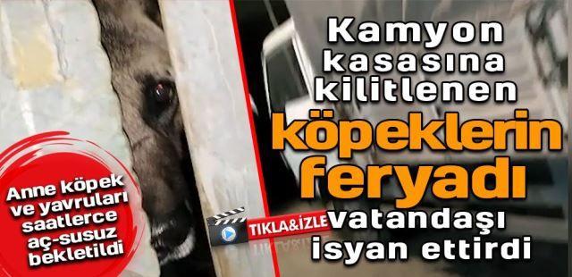 Kamyon kasasına kilitlenen köpeklerin feryadı vatandaşı isyan ettirdi