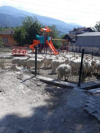 Burası Dokurcun:Çocuk parkı hayvan barınağı oldu