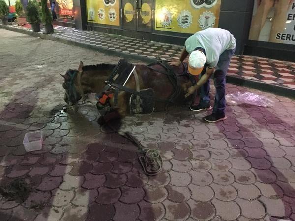 Gözleri önünde atı ölünce Veterinerden şikâyetçi oldu