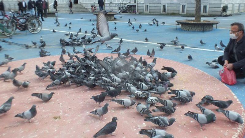 Gazi Süleyman Paşa Cami bahçesi Güvercinlerin merkezi oldu