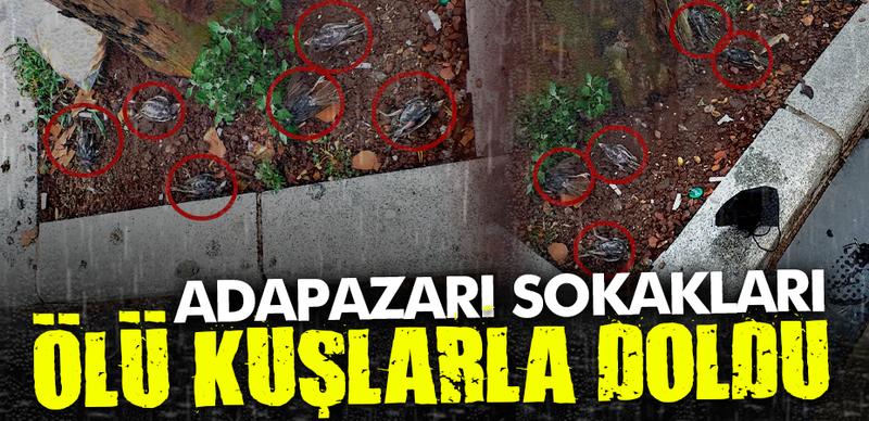 Adapazarı sokakları ölü kuşlarla doldu!