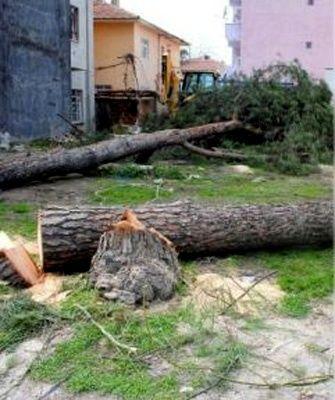 Ağaçlar neden kesildi?