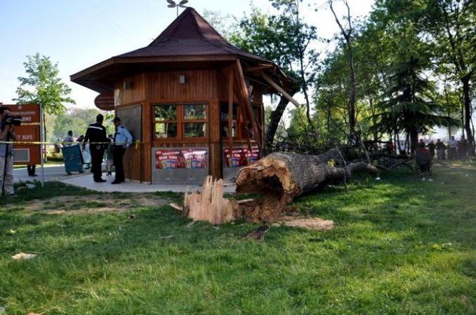 Piknik yapanların üzerine ağaç devrildi: 1 ölü, 1 yaralı