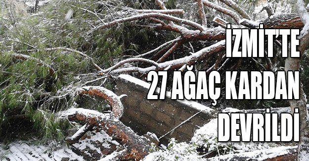 İzmit'te 27 ağaç kardan devrildi