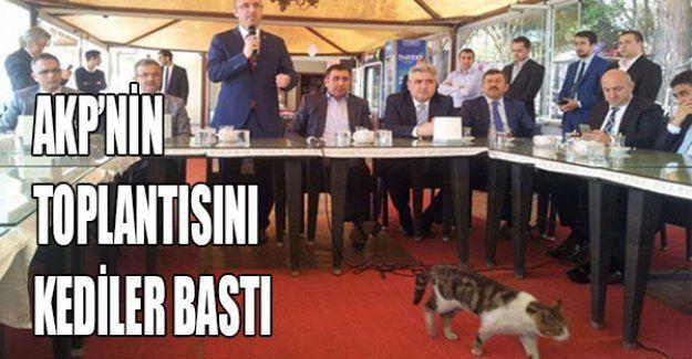 AKP'nin toplantısını kediler bastı