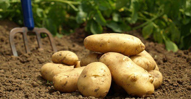 Patates zammının altından bakın ne çıktı!