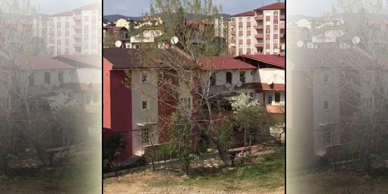 Dev ağacı kestiler