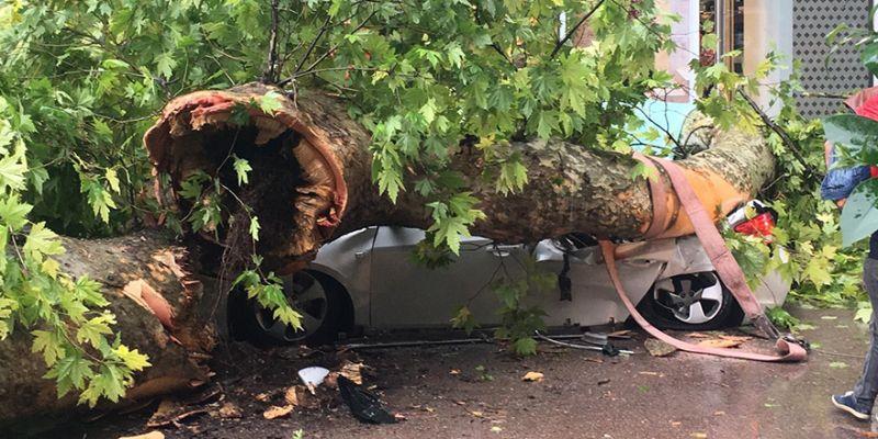 Çınar ağacı aracın üzerine devrildi! Ölümden saniyelerle kurtuldu