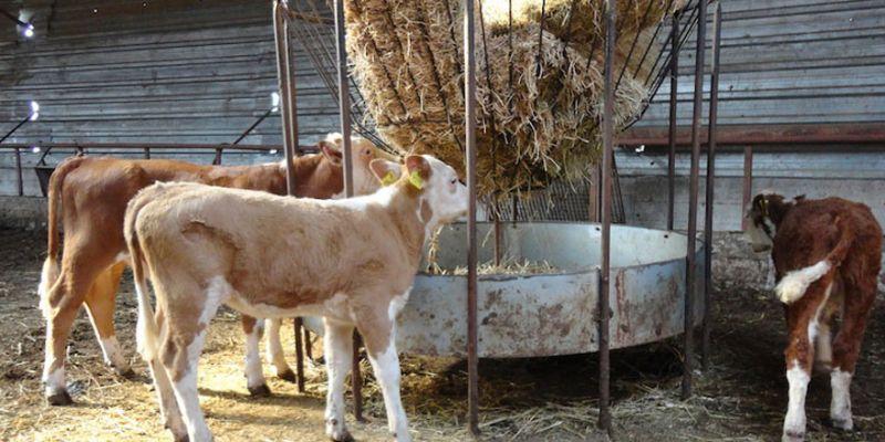 Ünlü oyuncunun yeni işi şaşırttı! Kocaeli'de çiftlik kurdu