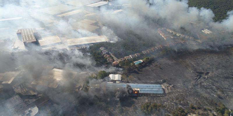 İşte orman yangınındaki acı bilanço!