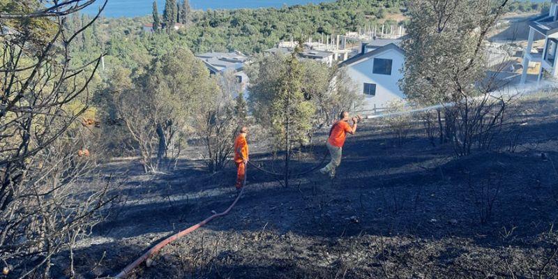 Zeytinlikte yangın! 20 dönüm zarar gördü