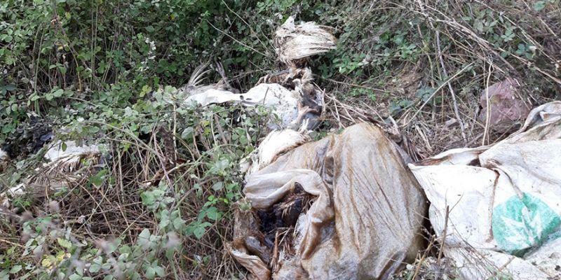 Kandıra'da 'ölü hindi' alarmı