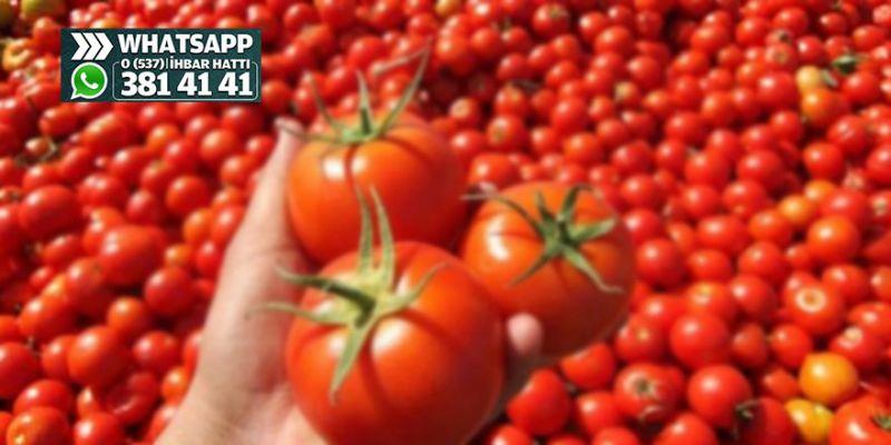 2 kilo domates aldı yarısı ezik, çürüktü