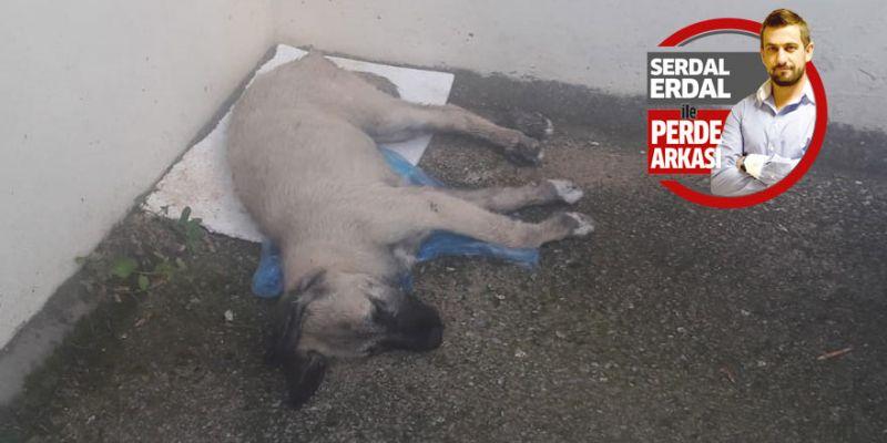 Zabıta geç geldi yavru köpek öldü