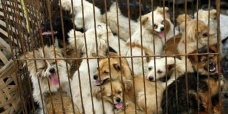 Çin'de bir ilk! Kedi ve köpek eti yasaklandı!