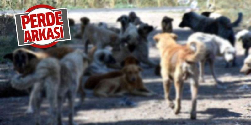 Sokak köpekleri yüzünden evlerinden çıkamıyorlar