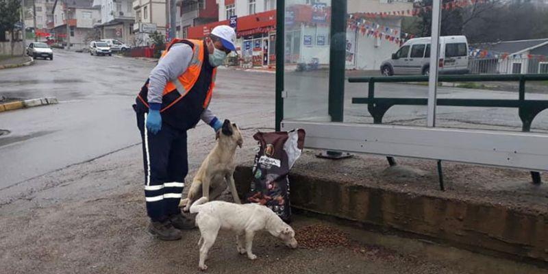Sokak hayvanları düzenli şekilde besleniyor