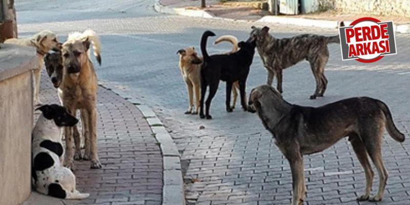 Kadıköy Mahallesi'nde köpekler çok korkutuyor