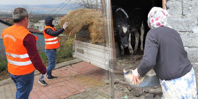 Hayvanları için saman istedi, belediye getirdi