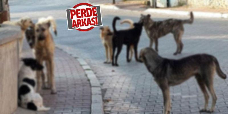 """""""Yuvacık'taki sokak köpekleri aç kalıyor"""""""