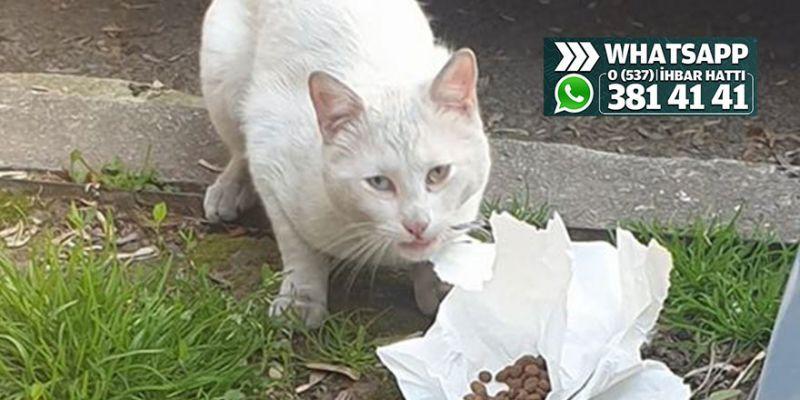 Bu sevimli kedi sahipli ama sokakta