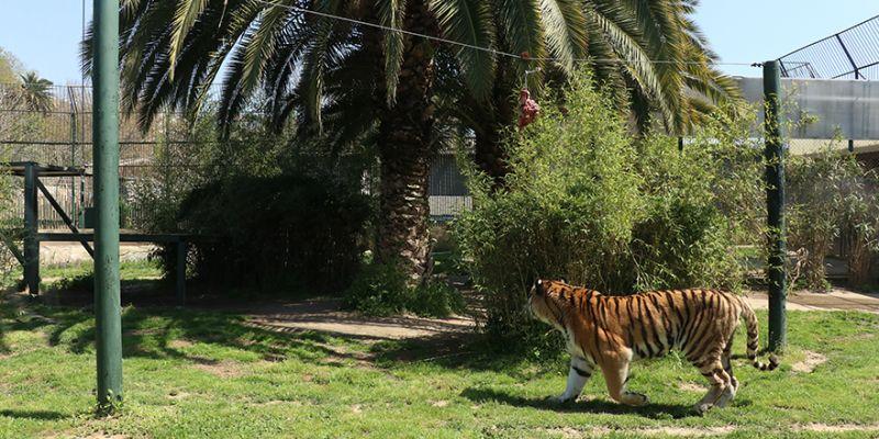 Hayvanat bahçesi sakinleri en sessiz baharını yaşıyor