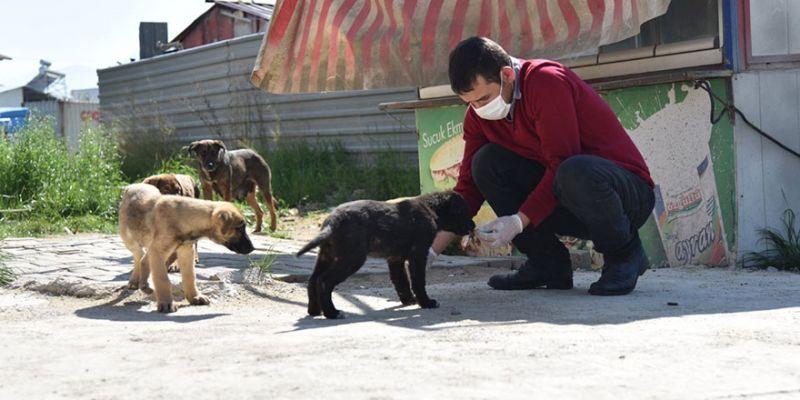 Sokak hayvanları yalnız kalmadı