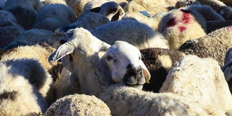 'Hayvan pazarları açılsın' talebi