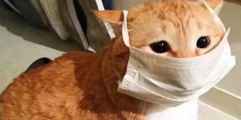 İlk defa evcil hayvanlarda koronavirüs tespit edildi