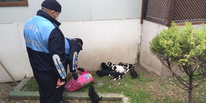 Yavru köpeklerin imdadına yetiştiler