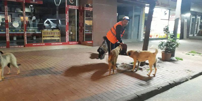 Sokak hayvanları karantina günlerinde de unutulmadı