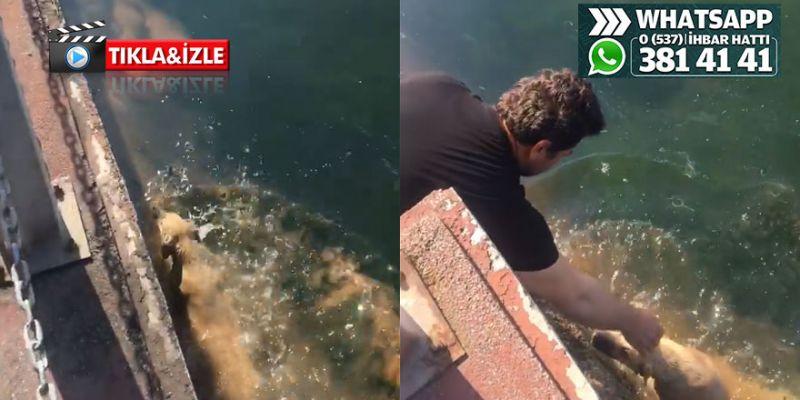 Denize düşen köpeği kurtardılar